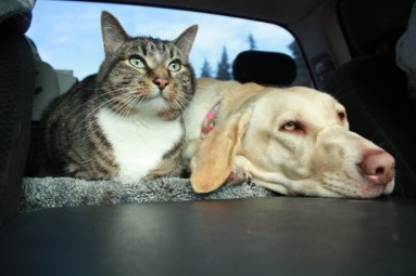 dog-cat-in-car
